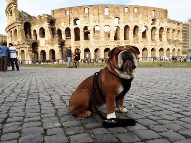 "Lewis Hamilton: ""Roscoe does Rome."""